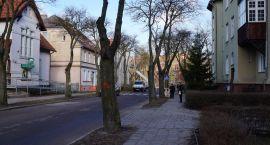 Wyrzynają drzewa na Limanowskiego