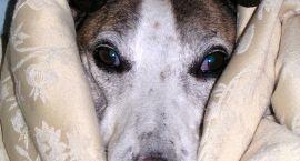 Gdy pies zachoruje nocą