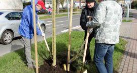 Kronodrzewko 2017. Pięćset osób sadzi drzewa nie tylko w lesie