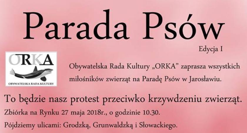 Wydarzenia, Parada Psów - zdjęcie, fotografia