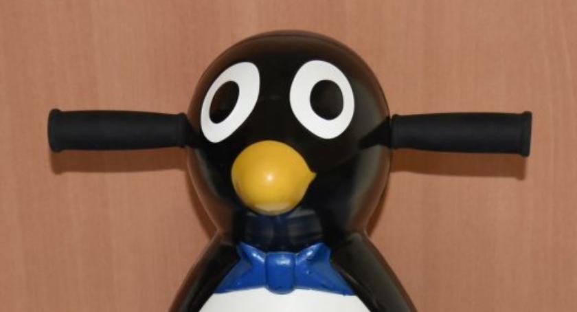 Odpowiedzą za kradzież pingwina