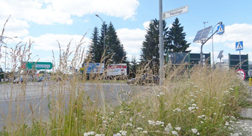 Kiedy ta trawa zostanie skoszona?