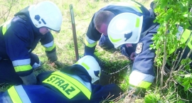 OSP Duńkowice uratowało bobra