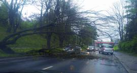 Drzewo runęło na ul. Tarnowskiego