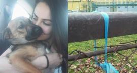 Sprawa powieszenia psa umorzona