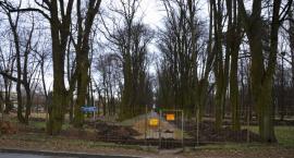 Nie będą karać za uszkodzone drzewa