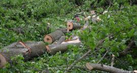 Mieszkańcy bronią drzew