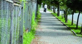 Uczelniana zieleń opanowała chodnik