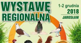 Wystawa Regionalna hodowców gołębi, królików i kur ozdobnych