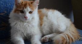 Jarosławskie koty po raz trzeci