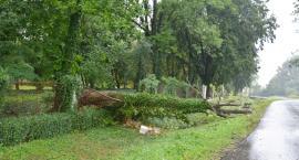 Powalone drzewo uszkodziło ogrodzenie