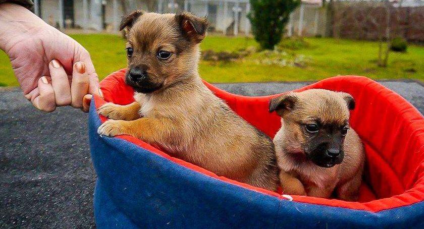 Aktualności, ŁTONZ poprowadzi schronisko psów - zdjęcie, fotografia