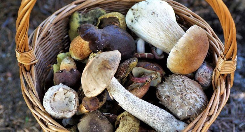 Rolnictwo, Osoby mające kontakt świniami powinny zbierać grzybów - zdjęcie, fotografia