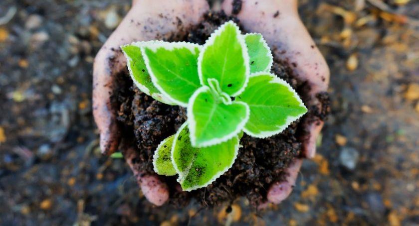Aktualności, piątek Ekologia sadzonkę - zdjęcie, fotografia