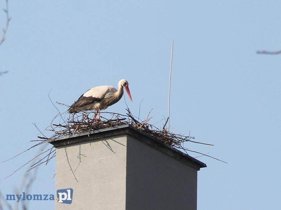 Newsy, Nieudana eksmisja bocianów Nowogrodzkiej [FOTO] - zdjęcie, fotografia