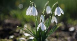 Pogoda: Wiosna coraz bliżej