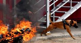 Jak wygląda doskonalenie podlaskich psów służbowych? [FOTO]