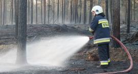 Płoną lasy w powiecie łomżyńskim