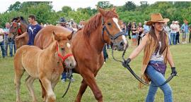 Przepiękne konie na wystawie w Piątnicy [VIDEO i FOTO]
