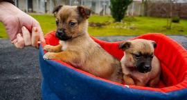 ŁTONZ poprowadzi schronisko dla psów