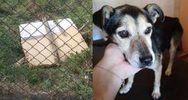 Łomża: Strażacy uratowali psa. Zwierzę było uwięzione w studzience [FOTO]