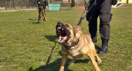 Kradł, niszczył i porzucał jednoślady! Policyjny pies pomógł je odnaleźć