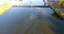 Tony oleju wyciekły do Narwi. Skażona woda płynie rzeką [VIDEO]