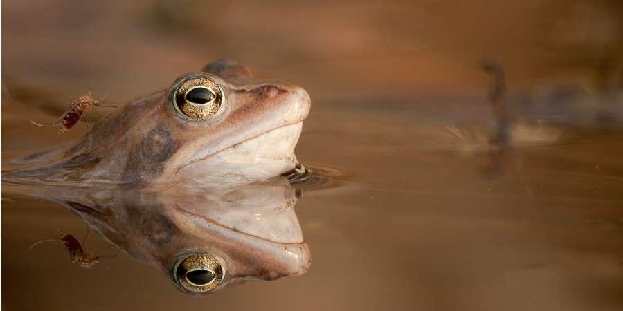 WYSTAWY, 1/100 sekundy fotografia przyrody - zdjęcie, fotografia