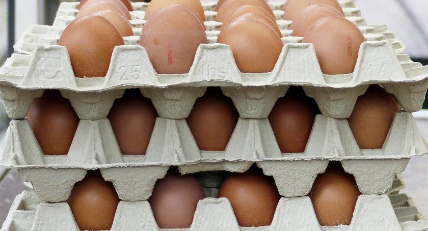 WYDARZENIA, Piła apetyt rekord Usmażą gigantyczną jajecznicę - zdjęcie, fotografia