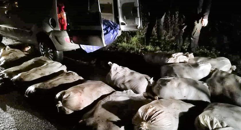 POLICJA, Rekordowa kradzież karpi Ukradli kilogramów - zdjęcie, fotografia