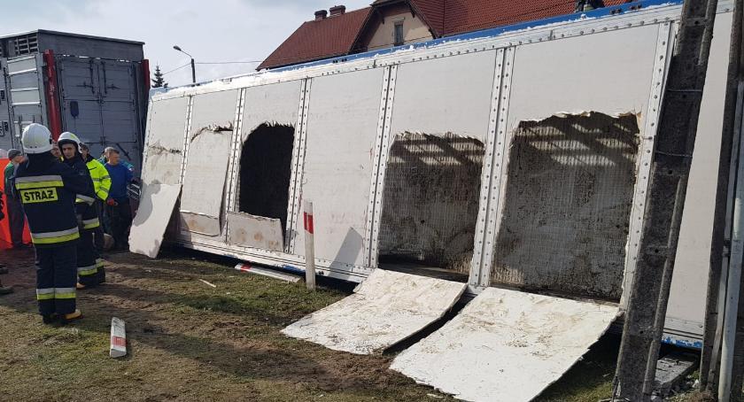 WYPADKI, Przewróciła ciężarówka przewożąca świnie [VIDEO] - zdjęcie, fotografia