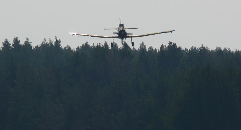 POŻARY, Sucho lasach Wzrasta ryzyko pożarów - zdjęcie, fotografia