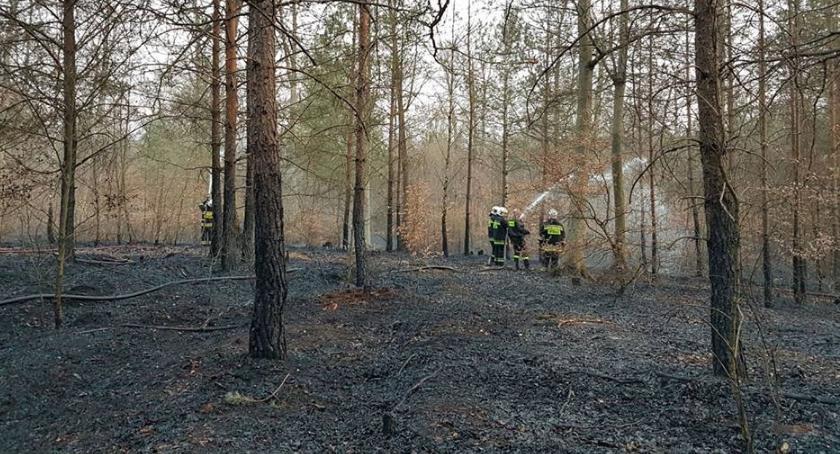 POŻARY, Spłonęło prawie hektarów Nagroda wskazanie podpalacza - zdjęcie, fotografia