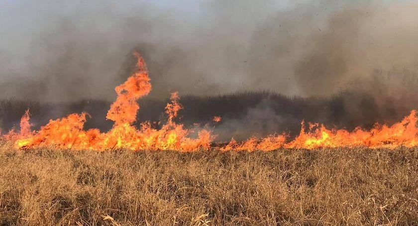 POŻARY, Potężny pożar łąk Ogień strawił cenne przyrodniczo tereny [ZDJĘCIA] - zdjęcie, fotografia