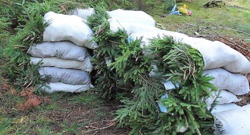 POLICJA, Kradli gałązki drzew Leśnicy zatrzymali złodziei stroiszu - zdjęcie, fotografia