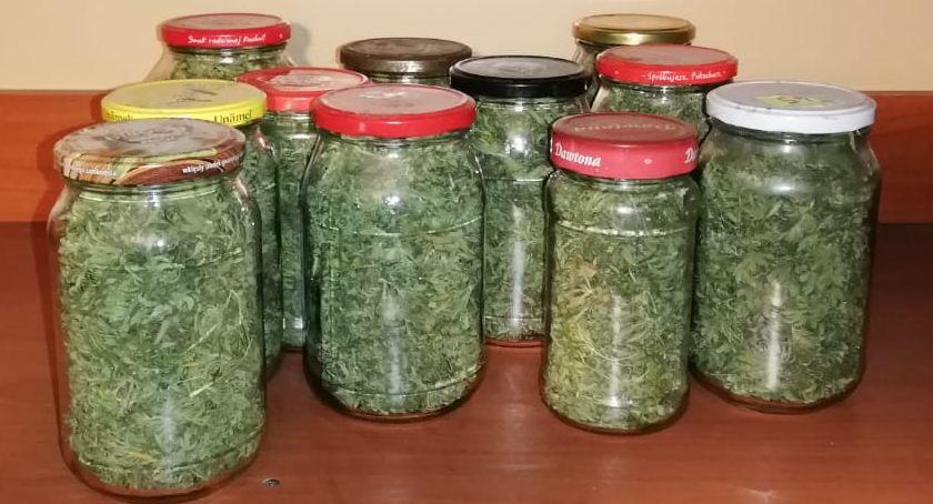 NARKOTYKI, Policjanci przejęli siedem kilogramów marihuany [ZDJĘCIA] - zdjęcie, fotografia