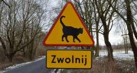 Nietypowy znak drogowy chroni koty [VIDEO]