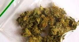 Policja przechwyciła dwieście porcji marihuany