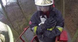 Strażacy uratowali kotka [VIDEO]