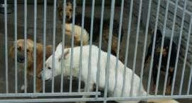Czterysta psów czeka na nowy dom