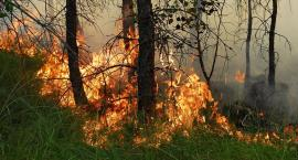 Sucho w lasach. Najwyższy stopień zagrożenia pożarowego