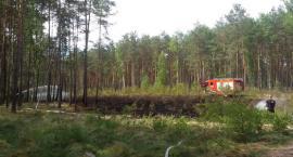 Pożar lasu przy Płotkach
