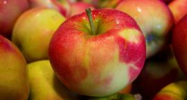 Rekord w jedzeniu jabłek? W sobotę w Pile próba pobicia Rekordu Polski