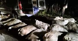 Rekordowa kradzież karpi? Ukradli 840 kilogramów ryb