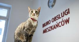 """Światowy Dzień Kota. Koci """"celebryci"""" z Piły [ZDJĘCIA]"""