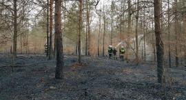 Spłonęło prawie 30 hektarów lasu. Nagroda za wskazanie podpalacza