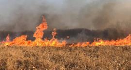 Potężny pożar łąk. Ogień strawił cenne przyrodniczo tereny [ZDJĘCIA]