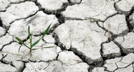"""""""Przerażeni biernością polityków"""". Młodzieżowy Strajk Klimatyczny również w Pile"""