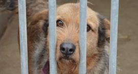 Nieprawidłowości w schroniskach dla zwierząt i urzędach. Są wyniki kontroli NIK