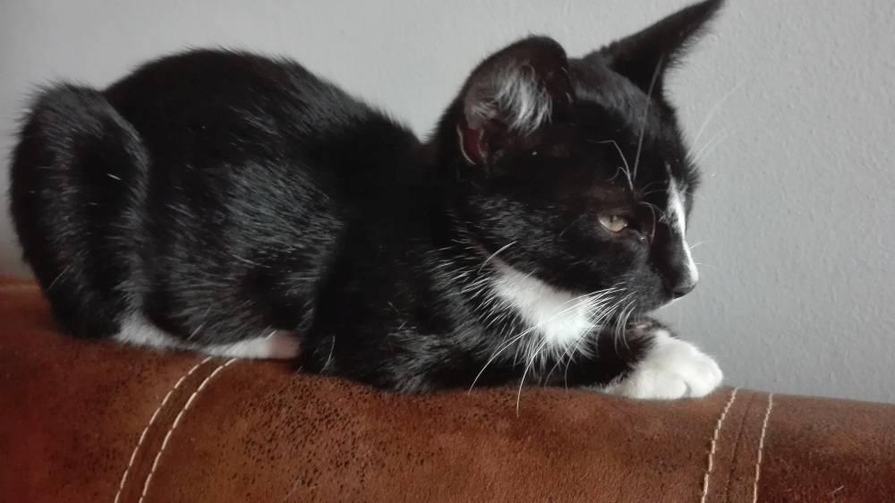 Zwierzaki, Kotek szuka - zdjęcie, fotografia